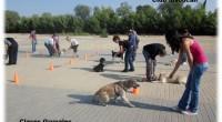 Con las clases en grupo, su perro aprenderá a obedecerle, independientemente de la distracción que tenga alrededor.