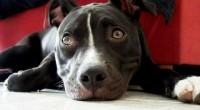 Le enseñamos a modificar las conductas antisociales de su perro: agresividad, miedo, fobia, estres, ansiedad, micción y defecación en el hogar etc