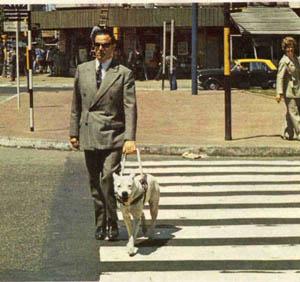Perro guíae en paso de cebra
