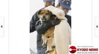Japón: conmovedora foto del perro que sobrevivió 21 días en el mar
