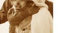 Japón: perro rescatado tras el tsunami se reencuentra con su dueña