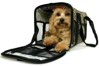 Tramites y documentación para viajar con animales