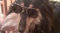 He aquí algunos de los consejos que se pueden usar para convivir con un perro ciego