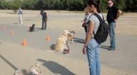 Ha dado comienzo el nuevo curso canino...