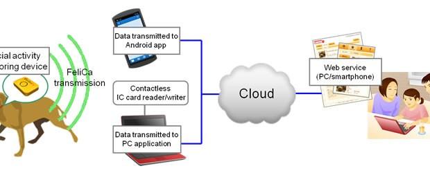 Collar de perro inteligente de Fujitsu permite visualizar la actividad de tu animal en la nube.