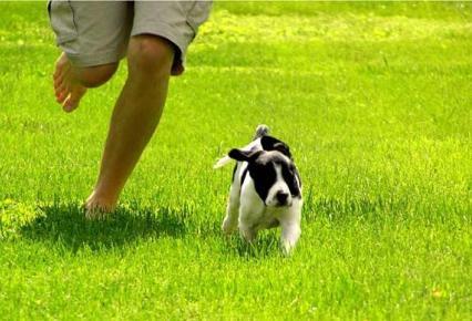 Los perros, al igual que los humanos, necesitan su tiempo de ejercicio y relajación cuando salen a la calle. Con estos simples consejos conseguiremos que nuestras mascotas hagan ejercicio, estén más sanos y sean más felices.