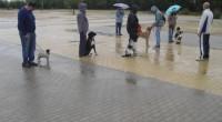 Todo perro conlleva una responsabilidad y unas obligaciones diarias....