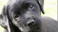 Los perros pueden también enfermar de la próstata. Algunas de las enfermedades que pueden padecer son las siguientes.