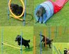 Sesión de agility donde enseñaremos a los perretes a como pasar por cada uno de los obstaculos...