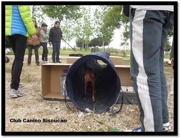Telma y el tunel