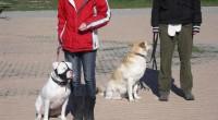 ¿Quién es realmente el culpable de las malas conductas de nuestros perros?