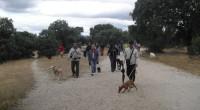 Evento organizado por el Club Canino Sisoucan en el Pardo de Madrid