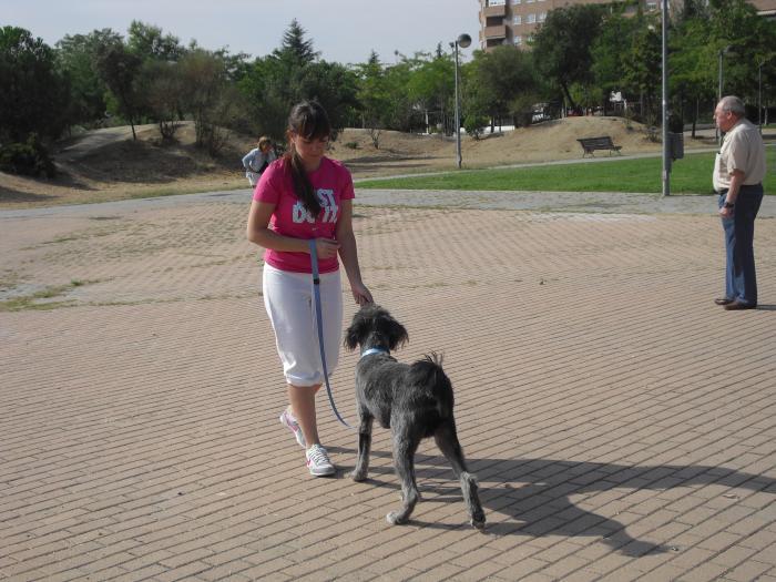 Club Canino Sisoucan