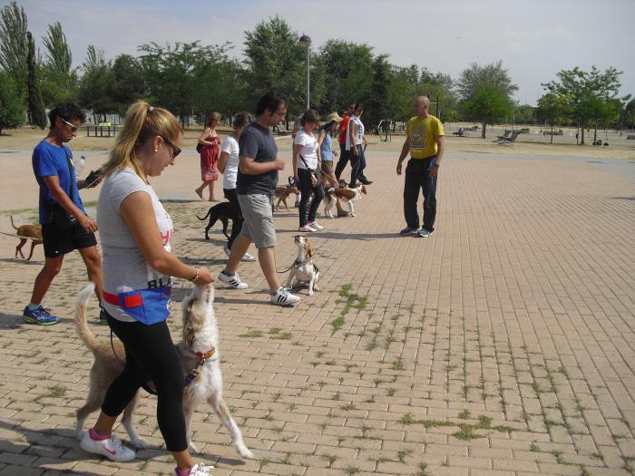 Club Canino Sisoucan. Grupo avanzado