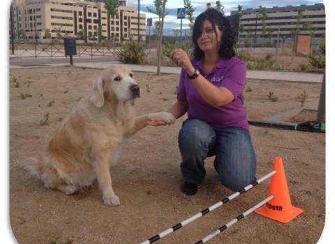Ven a conocer el mundo de las Terapias y Actividades asistidas con animales