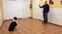 Disfrute con su perro enseñándole  ejercicios de educación y obediencia de forma sencilla y entretenida.
