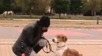 La educación de nuestras mascotas no solo son obediencia, conlleva muchas mas cosas.