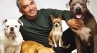 El adiestrador de perros César Millán, más conocido como 'El encantador de perros' visitó 'El Hormiguero' en el espacio de Cuatro presentado por Pablo Motos.