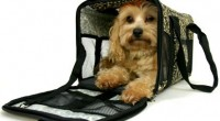Tramites y documentación necesaria para  <strong>viajar de un país a otro con tu animal o mascota</strong>.