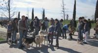 Nuestro club vuelve a organizar un paseo canino para pasar un rato entretenido y divertido acompañados de nuestras mascotas y amigos y poder tener la oportunidad de conocer mas gente canina