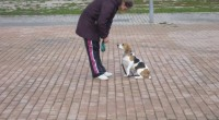 El perro está continuamente emitiendo señales, intenta comunicarse e indicarnos como le está afectando el entorno en cada momento.