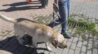 Caminata perruna y jornada de habilidades caninas..