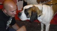 Son muchos los beneficios que se obtienen en el ser humano cuando se trabaja con perros coterapeutas. Os invitamos a que conozcáis como nos pueden ayudar los perros en los trastornos físicos y mentales.