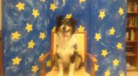 Curso de Educador Canino de Perro de Terapia en Febrero en Madrid PLAZAS LIMITADAS LUGAR: Escuela Canina Sisoucan. Paseo de la Democracia 17, Torrejon de Ardoz, Madrid. FECHAS: Febrero 18-19 […]